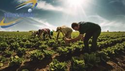 اقتصاد ترکیه و کشاورزی ترکیه
